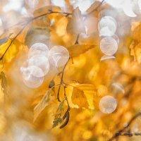Осень за окном :: Олег Мокрушев