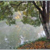 Ива на берегу. :: Vadim WadimS67