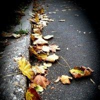 Кленовые листья в октябре :: Ирина Крохмаль