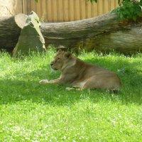 Пражский зоопарк :: Наиля