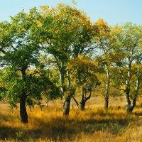 Осень берёт своё :: Юрий Муханов