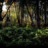 Утро в осеннем лесу...2.. :: Андрей Войцехов