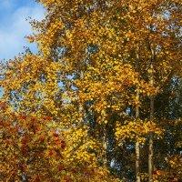 Краски леса. :: Лазарева Оксана