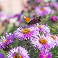 бабочка :: Андрей Рогаткин