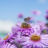 пчелы :: Андрей Рогаткин