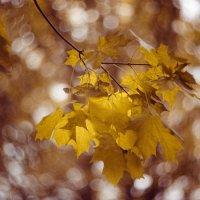 Осень пришла..... :: Oxana Schneider