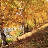Золотая осень 3 :: Григорий Капустин