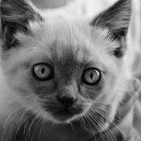 Про котёнка в руках у ребёнка :: galina tihonova