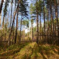 Лес :: Анастасия Фадеева