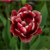 Мечты о будущей весне :: muh5257