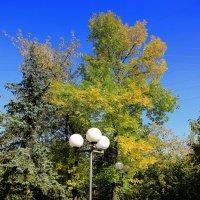 Осень в парке :: Виктор Калабухов