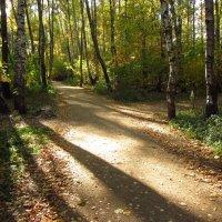 Еще вчера осень радовала - IMG_2147 :: Андрей Лукьянов