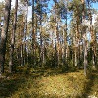 Осенний лес. :: Валентина Жукова