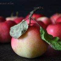 Осень-время спелых яблок :: Галина Galyazlatotsvet