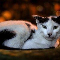 Обитатели зоомагазина--из серии кошки очарование моё! :: Shmual Hava Retro