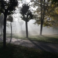 Утро, сквер, туман. :: Юрий Бондер