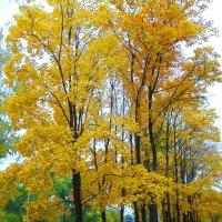 Осень - прекрасное время года :) :: Галина Медведева