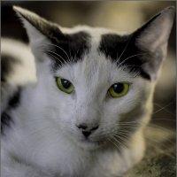 Портрет Мяу или обитатели зоомагазина--из серии кошки очарование моё! :: Shmual Hava Retro