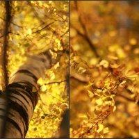 Осень :: Дарья Яковлева
