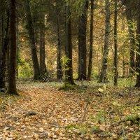Осенний лес.... :: Cергей Павлович