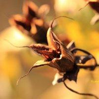 Сухие цветы тоже цветы... :: Rimma Telnova