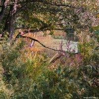 Озеро в парке :: Dmitry Swanson