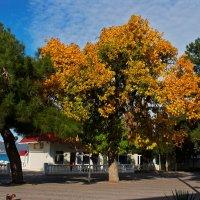 Уходим в осень :: Валерий Дворников