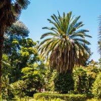 Ботанический сад :: Андрей Гриничев