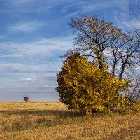 Неминуемая осень :: Леонид Никитин