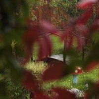 Взгляд на сад сквозь листья :: Людмила Быстрова