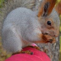 Орешки грызёт :: Таня Фиалка