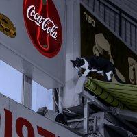 А вот так они по крышам или обитатели зоомагазина--из серии кошки очарование моё! :: Shmual Hava Retro