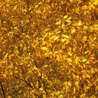 Это осень :: Валерий Талашов