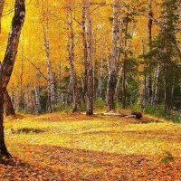 Заблудилось в лесу солнце... :: Галина Стрельченя