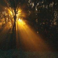Утро в лесу :: НАТАЛЬЯ КАМАЙКИНА