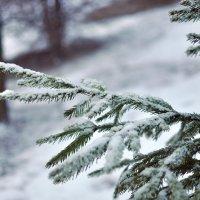 вспоминая снег. :: Алексей .