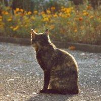 Кошка :: Dasha Darsi