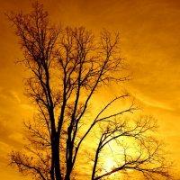Осенний закат :: Евгений Юрков
