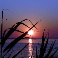 Рассвет на озере :: Ольга Голубева