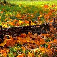 золотая осень :: Ирина Бучева