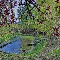 Пересохший пруд :: Валерий Талашов
