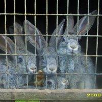 Просто кролики ... :: Александра