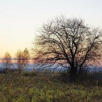 Одинокое дерево :: Виктор Четошников