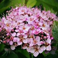 Цветок :: Полина