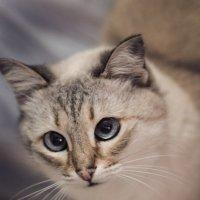 Cat :: Мария Буданова