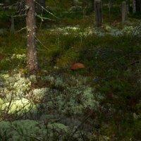 В лесу :: Александр Кузнецов