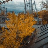 Осень... :: Света Кондрашова