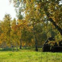 Осень цвета янтаря. :: nadyasilyuk Вознюк