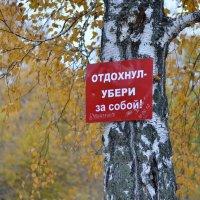 Табличка в лесу :: Виталий Городниченко