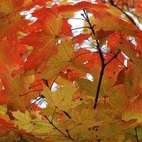 Осенняя капелька.... :: Tatiana Markova